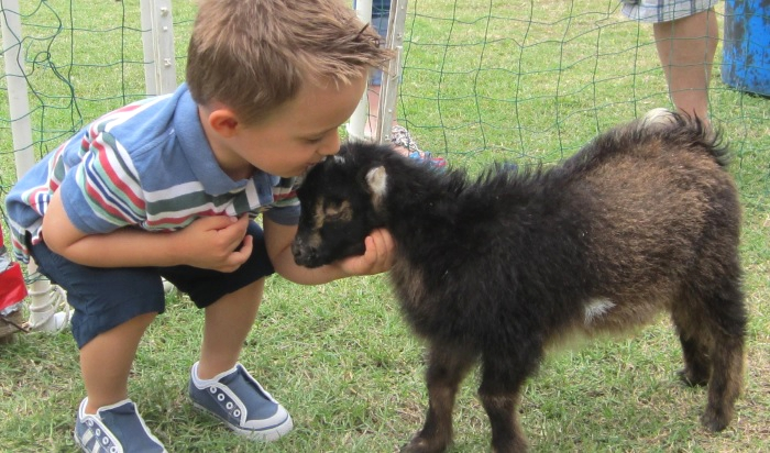 ideas-for-entrepreneurs-petting-zoo-t